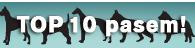 Top 10 pasem